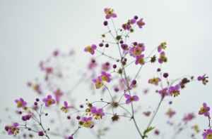 flower-floral-blossom-nature.jpg